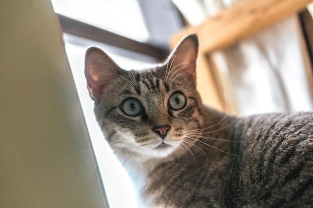 Кошка живет возле окна.