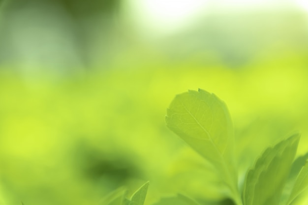 公園、庭または森のビューテクスチャ緑自然ぼやけた背景の緑の葉を閉じます。緑の自然の背景の空のスペースに書き込みまたはコピーするために使用します。