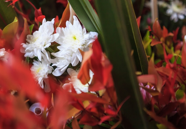 花瓶の背景に白の咲く菊観賞用フラワーブーケアレンジメント。