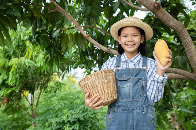 Молодая девушка проверяет качество и хранит манго на местной ферме. фермер - это профессия, которая требует терпения и усердия. быть фермером или садовником.