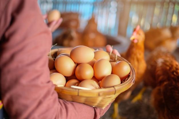 女性の手は、農場で藁とバスケットで生の卵を持っています。