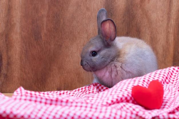 スタジオで茶色の木製の背景を持つ赤いテーブルクロスとハートの形の上に座って小さなウサギ