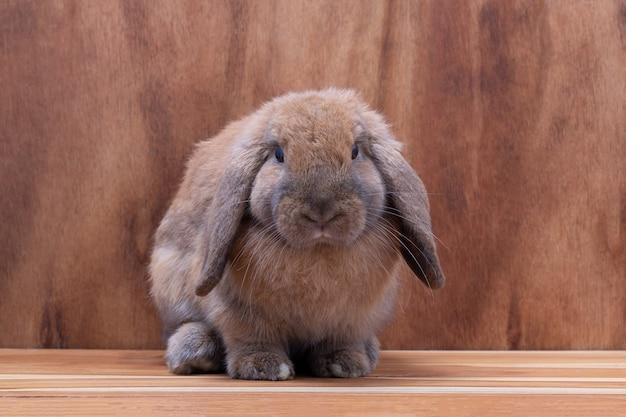 スタジオで茶色の木製の背景に小さな茶色のウサギ