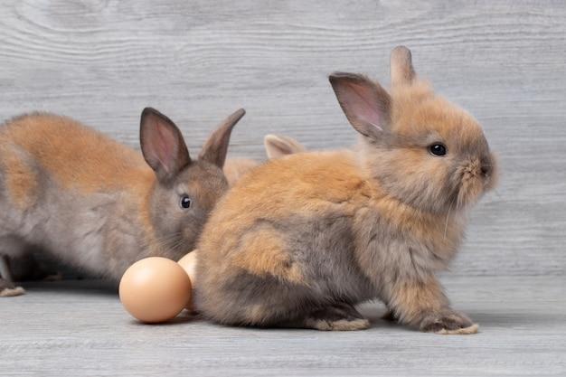 スタジオで卵と灰色の木製の背景の上に座っている小さなウサギ