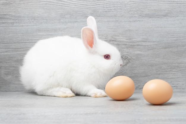 スタジオで卵と灰色の木製の背景の上に座っている小さな白いウサギ