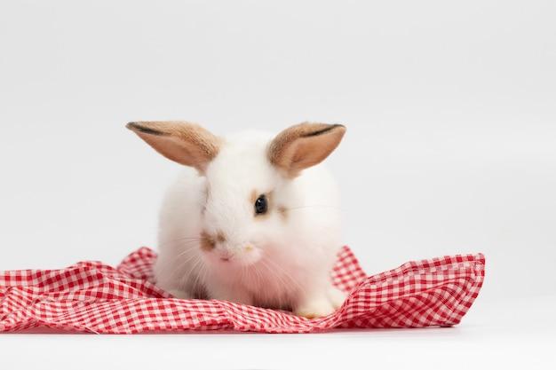 スタジオで分離の白い背景を持つ赤い布のテーブルの上に座っている小さな白いウサギ。