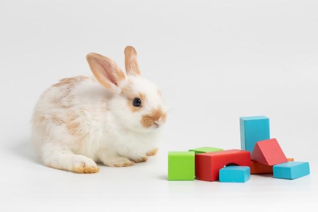 幾何学的図形の色のスタジオで孤立した白い背景の上に座っている小さなカップルウサギ。
