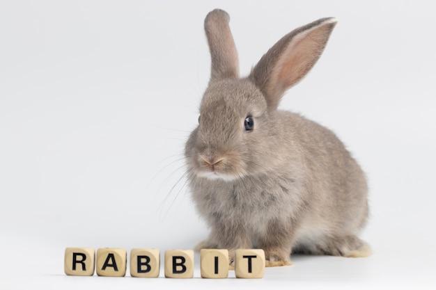 スタジオで孤立した白い背景の上の木箱の質感と座っている小さなウサギ。