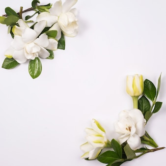 Рамка из белых цветов и зеленых листьев на белом фоне
