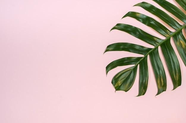 Тропический пальмовый лист на розовом фоне.