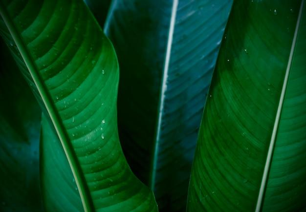 トロピカル植物はテクスチャの背景を残す