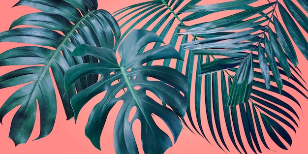 コーラルカラーの背景に夏の熱帯の葉