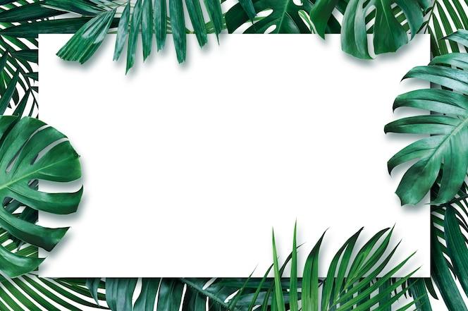 白い背景の上の空白の紙と夏の熱帯の葉