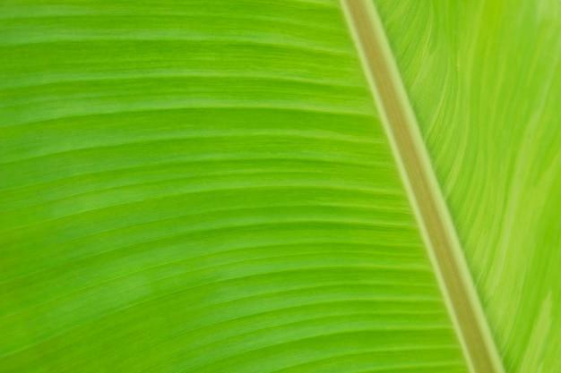 マクロバナナの葉のテクスチャ背景