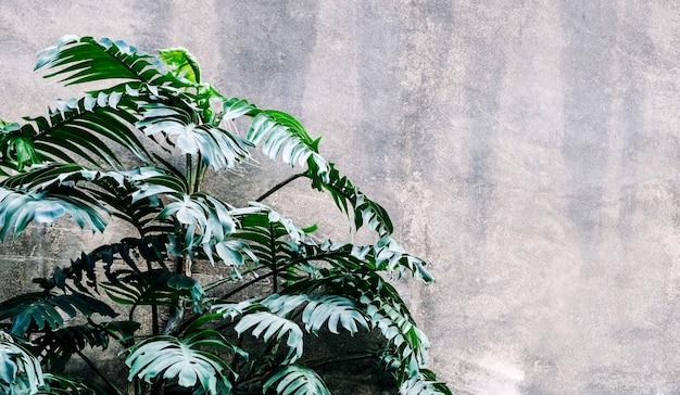 庭の熱帯のフィロデンドロンの葉の背景
