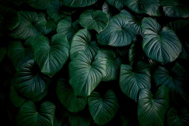 庭の心の王の熱帯の葉
