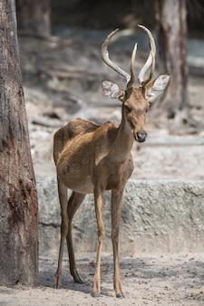 ソンクラー動物園で展示されていた動物