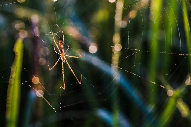 豊かなフィールドで赤いクモ。