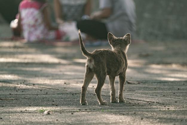 Бродячая собака гуляла в саду