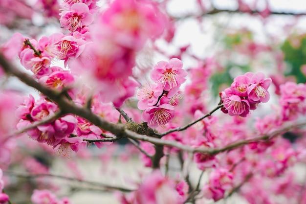 Много розовых цветов в городском парке киото