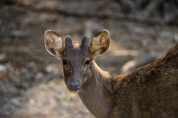 動物園の鹿の写真