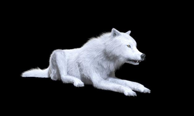 Белый волк изолировать на темном фоне с обтравочный контур, арктический волк