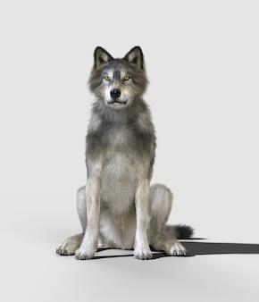 Опасный волк