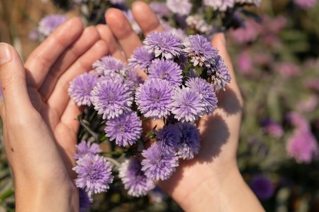 手の女性の美しく、新鮮なマーガレットの花