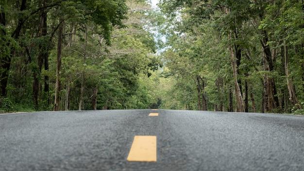Пустая асфальтовая дорога, ведущая в зеленый лес.