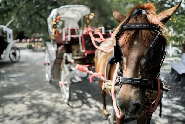 Крупным планом перевозки лошадей в городе