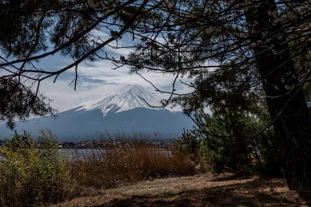 前に木がある富士山。白、富士山の上に富士山の雪