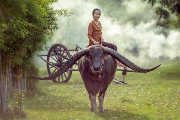 タイ、世界の水牛のラングストホーン、長いホーンバッファローに乗ってアジアの女の子。