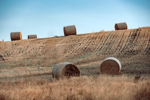 ニュージーランドの山を背景に夏の畑で干し草の山
