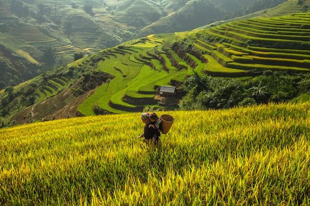 祖母と孫は収穫期に米を収穫するために旅行しています。