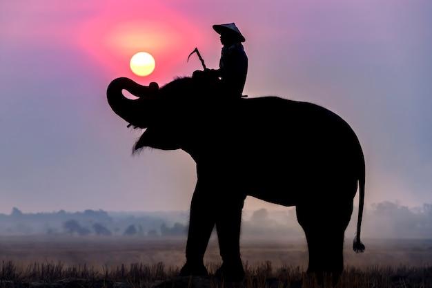 象と田んぼに旅行中の日の出の象使いのシルエット。