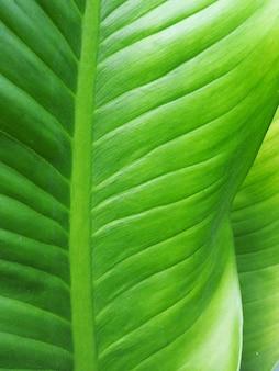 大きなヤシの葉の自然の緑