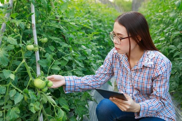 品質のトマトの植物をタブレットでチェックしている少女。農業と食品生産のコンセプト。