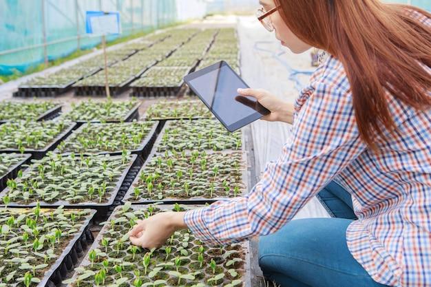 若い女の子はタブレットで苗の品質をチェックします。農業と食品生産のコンセプト。