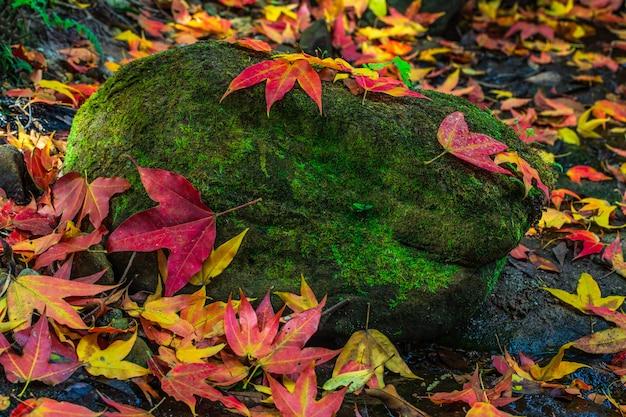 カラフルなカエデの葉、タイのフールアン野生生物保護区で秋の緑の岩の上。