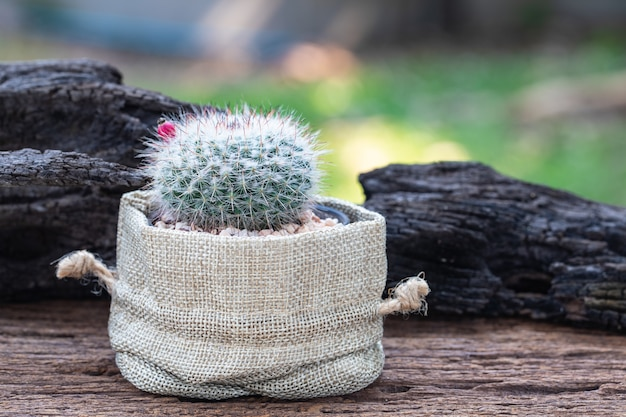 庭の古い木製のテーブルの上の布バッグの中の小さなサボテン。