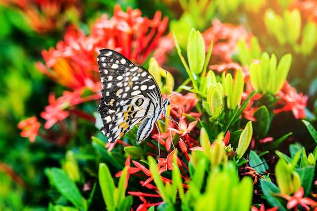 赤い花の上の蝶。