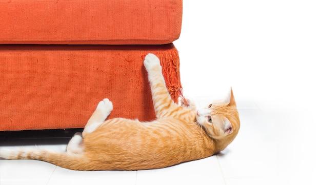 Котенок, расчесывающий ткань