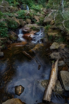 スペインの自然公園で葉に囲まれた岩の間を流れる小さな川