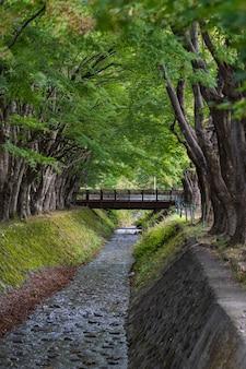 山梨県河口湖にある川沿いのメープルのトンネル