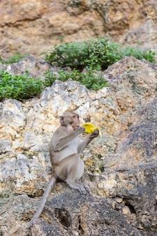 Обезьяна держит банановую кожуру сидя на скале