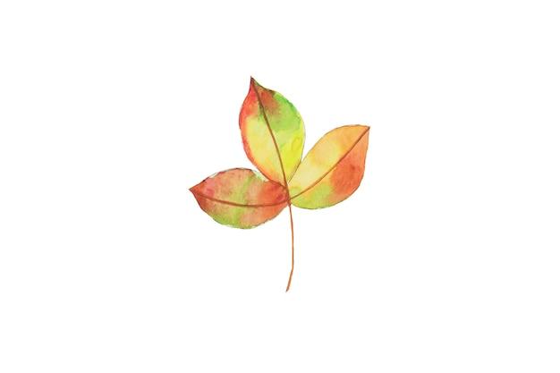水彩画の秋、秋の黄色、オレンジの葉の手描きデザイン要素。
