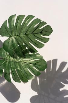 手のひらの概要は、白い壁に影を残します。植物学のコピースペース。