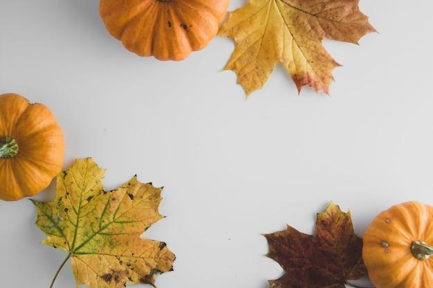 白地にオレンジ色のカボチャと秋の背景のカエデの葉