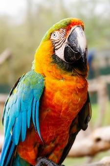 Попугай ара на ветвях, голубые, желтые, оранжевые красочные попугаи в зоопарке.