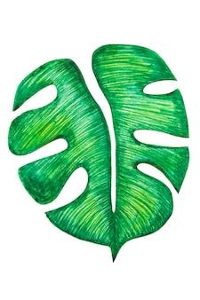 Монстера тропический лист изолированы. рисованной иллюстрации лето, элемент дизайна.